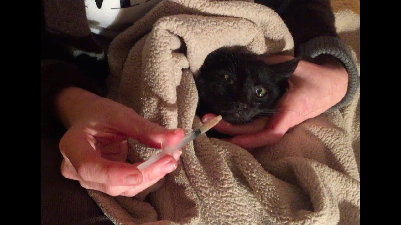 13s black cat
