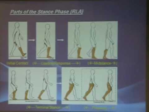 Normal gait biomechanics - D. Amr Arafa