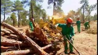 Documental  5´54´´  - Biomasa  -Energías renovables