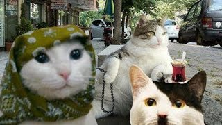 AKP'li kedi, CHP'li kedi, Devrimci kedi vs.