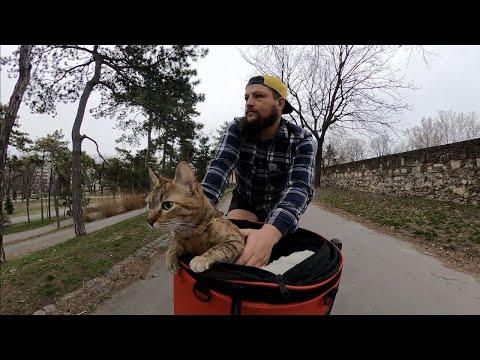 Cats Bike Adventure Through Serbia 🇷🇸😻