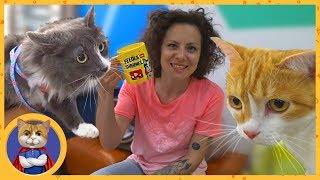 Рыжик на съемках программы Видели видео на Первом канале. Знакомство с Anny Magic и кошкой Алисой