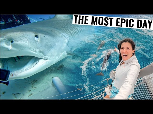 RESCUE AT SEA AFTER EPIC SHARK ENCOUNTER | Sailing & Fishing Ep. 63