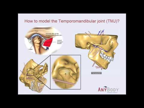 [Webcast] - Validation of a new AnyBody mandible model
