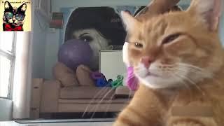 Смешные котики, котики и огурцы,розыгрыш своего пи...