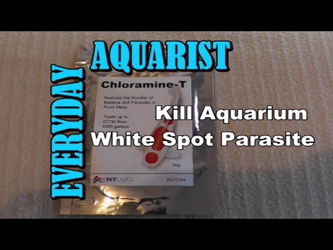 Cure Fish White Spot Ick With Chloramine T