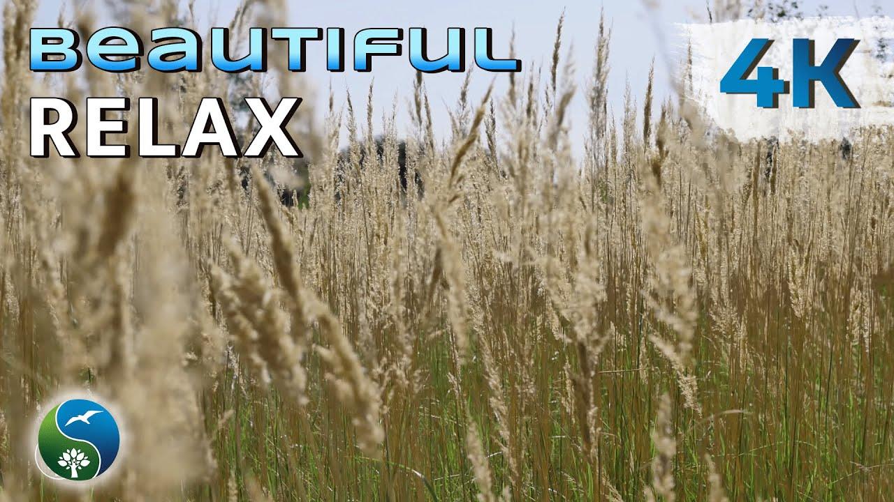 4K UHD. Красивое видео, природа, высокая трава, музыка, релакс, медитация, дзен, 4K.