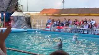 Дельфинарий в Ярославле(Программа выступления морских котиков и дельфинов сделана профессионально. Я в восторге! Всем рекомендую..., 2013-08-26T06:04:39.000Z)