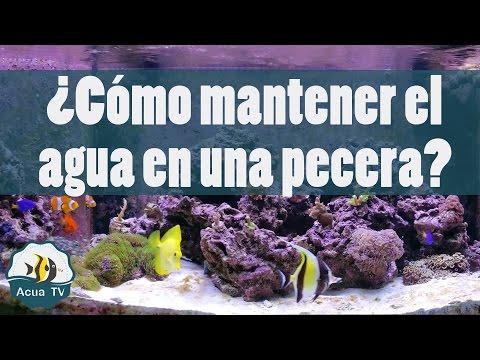 Sistema de filtrado de una pecera marina doovi for Como mantener el agua limpia de un estanque