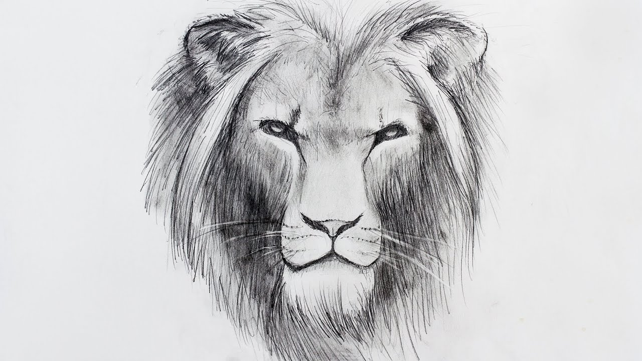 how to draw a lion einen l wen zeichnen sternzeichen speed drawing youtube. Black Bedroom Furniture Sets. Home Design Ideas