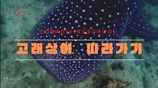 고래상어  따라가기 | 가장큰어류 | 필리핀 스킨스쿠버…