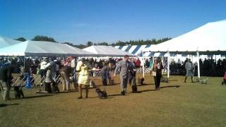 01-15-2012 Tampa Bay Kennel Club Dog Show