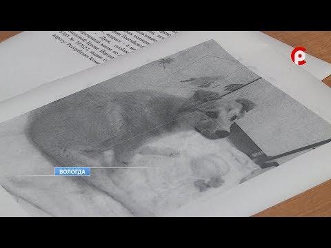 Жители Коми ищут собаку в приюте Вологды