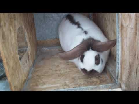 Видео: Странная гибель двух крольчих.