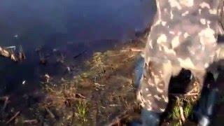 Житомирская область – Рыба дохнет от сгустившейся воды рек(Житомирская область – Рыба дохнет от сгустившейся воды рек., 2016-04-19T10:30:37.000Z)