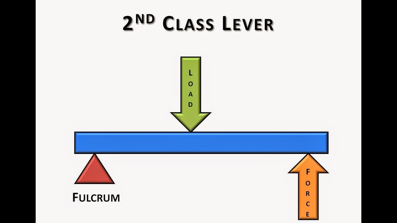 2nd Class Lever Video - YouTube