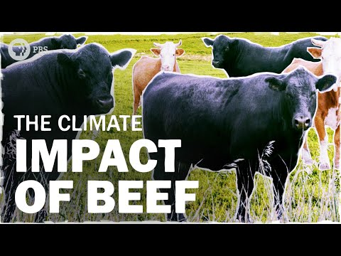 Beef Is Bad For The Climate… But How Bad? | Hot Mess 🌎