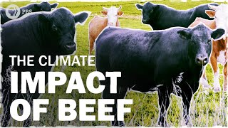 How is Beef Bad for the Climate | Hot Mess