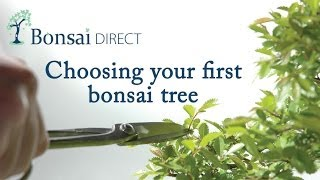 Bonsai Care with Lloyd Noall - Chapter 4 - Choosing your first bonsai