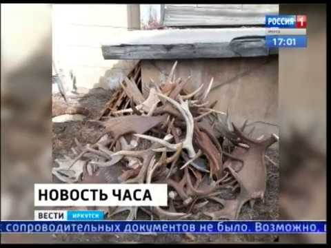 Грузовик с тонной рогов диких животных задержали в Слюдянке