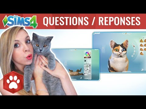 Sims 4 chiens et chats questions r ponses blabla avec - Com chien et chat ...