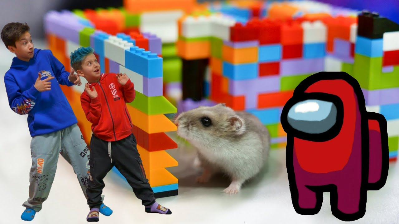 Кто Первый Выберется из Экстремального КАРТОННОГО Лабиринта для Хомяка Челлендж! Among Us Hamster
