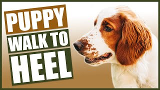 HOW TO TRAIN YOUR SPANIEL PUPPY TO WALK TO HEEL!