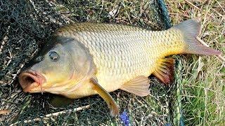 Рыбалка на Дону. Аксайские плиты. Фидерная рыбалка на сильном течении. Сазан рвет поводки.