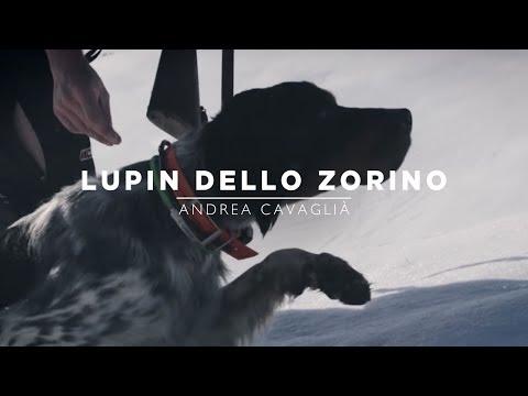 Lupin dello Zorino | Mountain Hunters