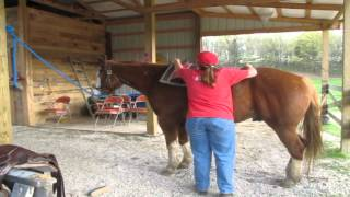 How To: Santa's Stables Prepares A Horse To Ride HD (1:44)