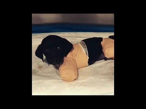 قضية تعذيب كلب تهيمن على الانتخابات التركية  - نشر قبل 10 ساعة