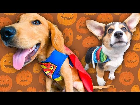 Love Dog in cute costumes? Res...