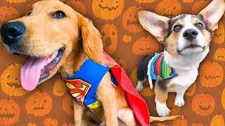 Best Dog Halloween Costumes! (judges decide cute and funny dog winners)