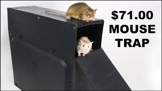 Is This Chinese Mouse Trap Worth $71?  The Double Plank Box Mouse Trap. Mousetrap Monday.