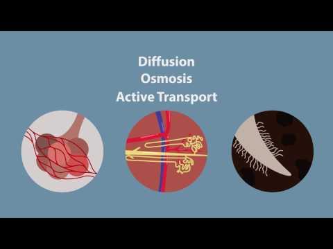 Глава 13. Плазматическая мембрана - Предмет клеточной