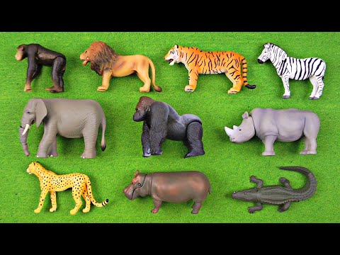 Learning Animal Names & Fun Facts #1 - African Animals, Safari Animals for Kids - Organic Learning