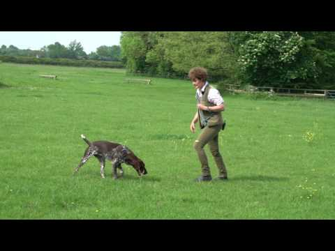 Teaching Recall and Release for young German shorthaired Pointer