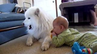 красивая собака и младенец