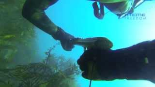 Spearfishing Hawkes Bay NZ