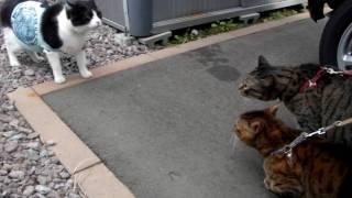 猫の喧嘩は目を合わせないのが原則なのか?