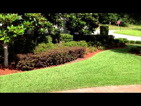 The Other Side Lawn & Ornamental Pest Control Inc: Tree & Shrub Care, Lawn Spraying in Lakeland FL