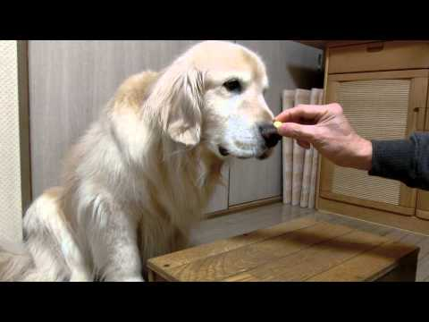 These videos of a golden retriever eating vegetables are strangely comforting