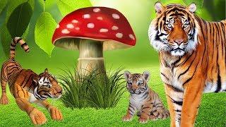 ТИГРЫ и ОГРОМНЫЙ МУХОМОР! Как трубкозуб спас тигренка!!! Мультфильмы про животных для детей