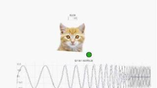 猫の目の周波数応答