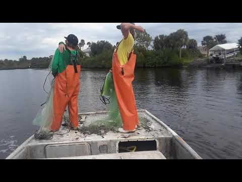 Two Brothers Doing What They Love Scrapping The Fish Up Roe Mullet Fishing