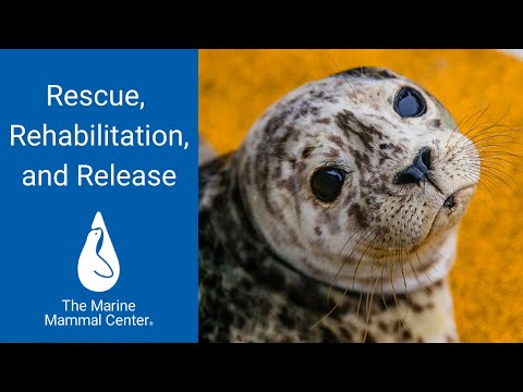 Rescue, Rehabilitation and Release