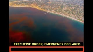 Florida Governor Issues Executive Emergency Order, Red Tide, Extreme Weather Updates, Latest