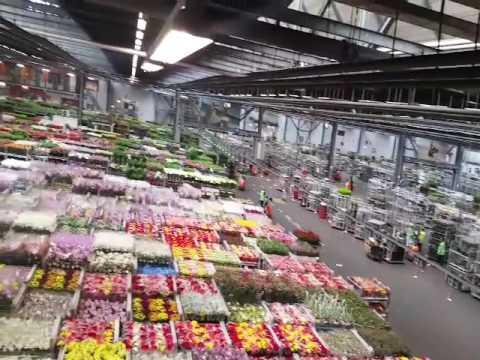 Distributie hal van bloemenveiling Flora Holland