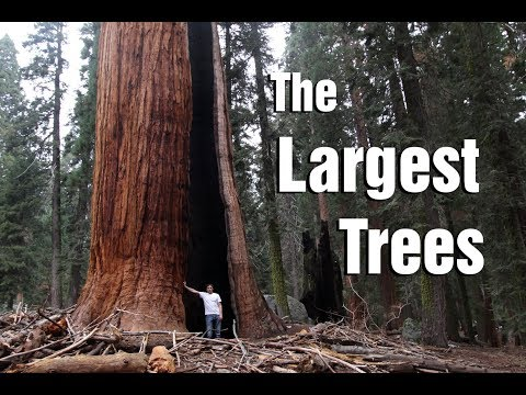 Exploring the Giant Sequoias - Oddments Vlog 19