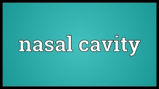 Nasal cavity Meaning